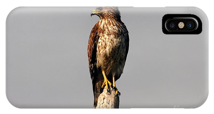 Red Tailed Hawk IPhone X Case featuring the photograph Red Tailed Hawk by David Lee Thompson