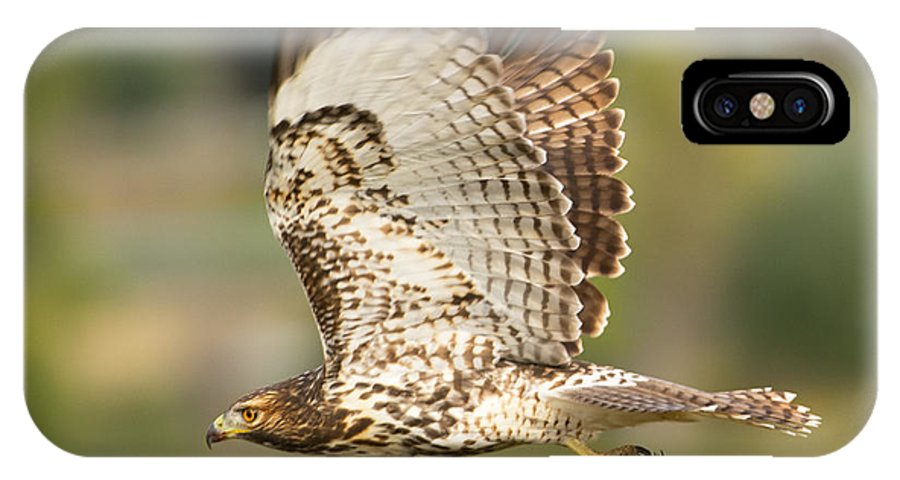 Bird IPhone X Case featuring the photograph Red Tailed Hawk Hunting by Dennis Hammer