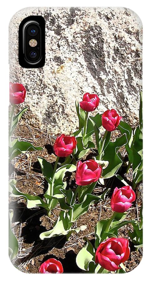 Tulips IPhone X / XS Case featuring the photograph Red Tulips by Stephanie Moore
