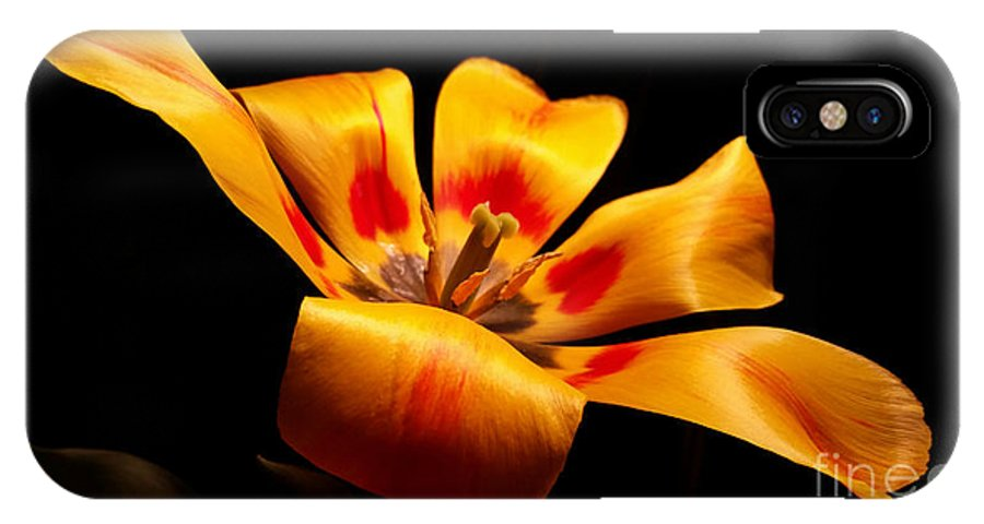 Tulip IPhone X Case featuring the photograph Red-yellow Tulip 1 by Parker Bradley