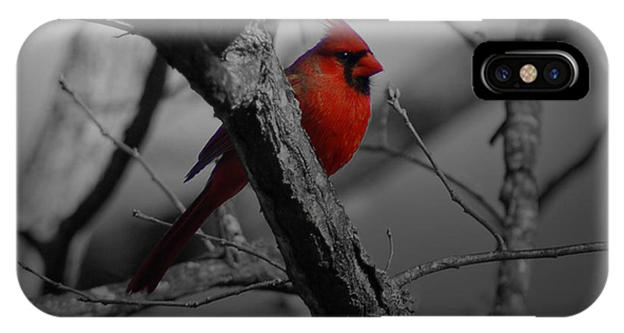 Cardinal IPhone X Case featuring the photograph Redbird by Shawn Wood