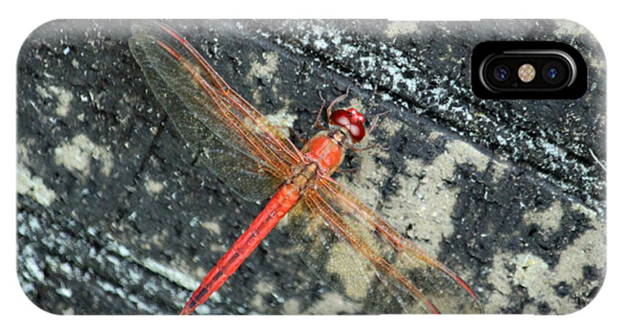 Dragonfly IPhone X Case featuring the photograph Redhead by Suzanne Gaff