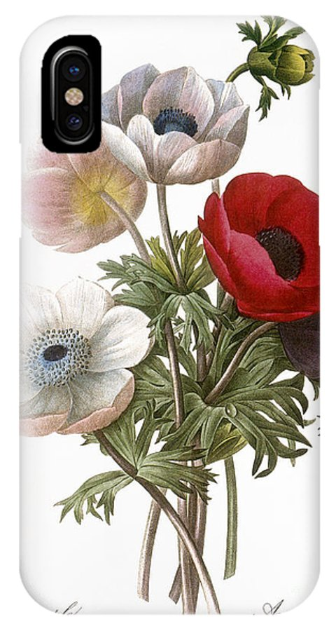 1833 IPhone X Case featuring the photograph Redoute: Anemone, 1833 by Granger