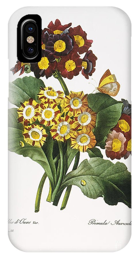 1833 IPhone X Case featuring the photograph Redoute: Auricula, 1833 by Granger