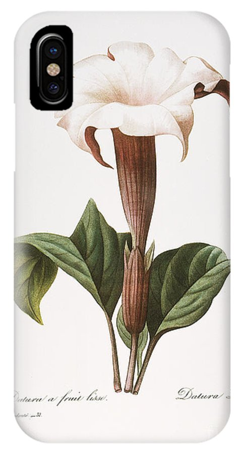 1833 IPhone X Case featuring the photograph Redoute: Datura, 1833 by Granger