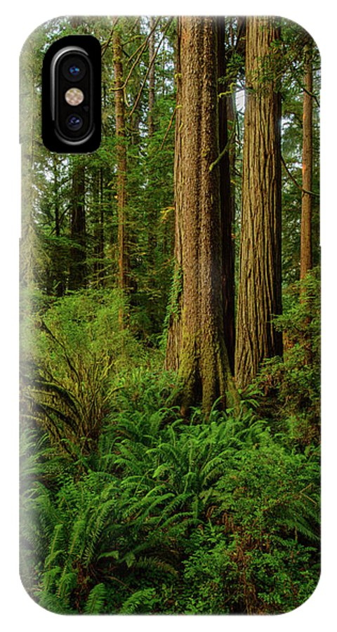 Charlie Choc IPhone X Case featuring the photograph Redwoods And Ferns by Charlie Choc