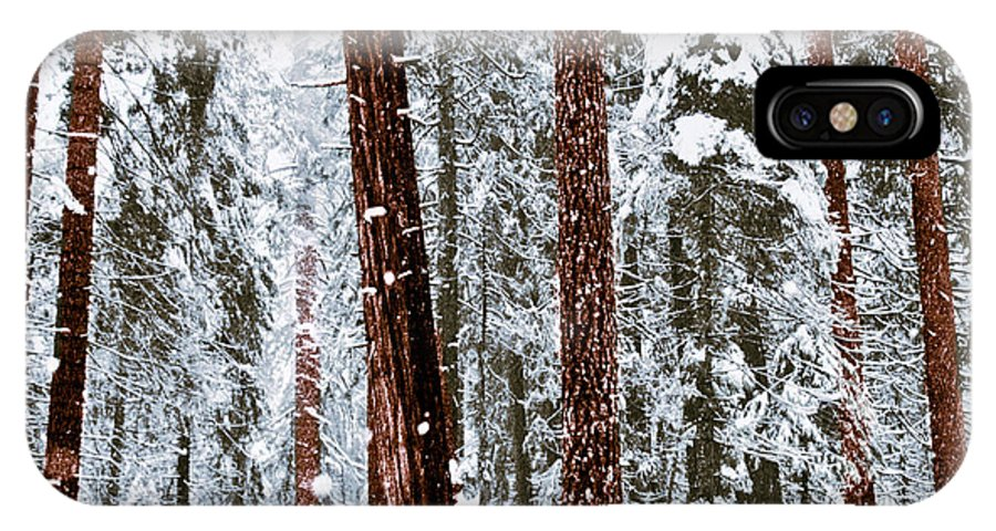 Landscape IPhone X Case featuring the photograph Redwoods In Snow by Karen W Meyer