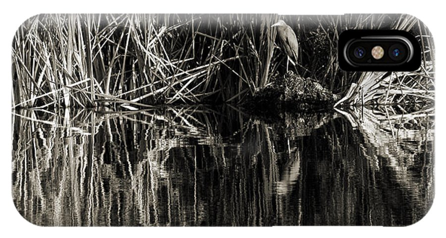 Little Blue Heron IPhone X Case featuring the photograph Reeds And Heron by Steven Sparks
