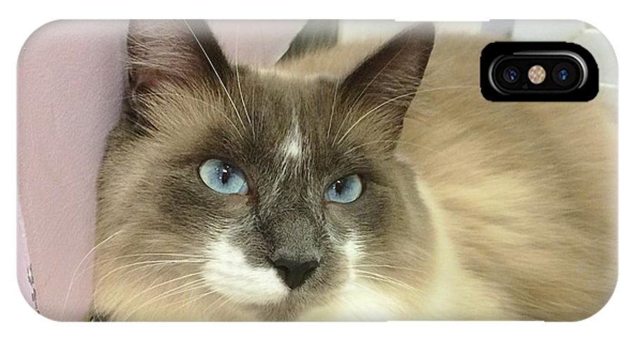 Domestic Cat IPhone X Case featuring the photograph Blue-eyed Boy by Diane Macdonald