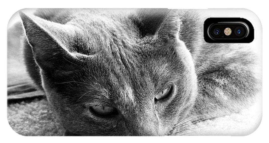 Cats IPhone X Case featuring the photograph Resting by Amanda Barcon