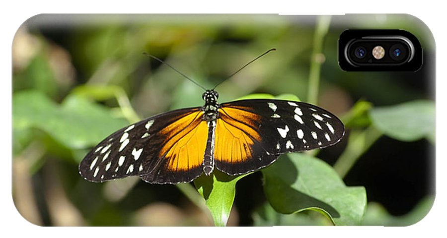 Butterfly IPhone X Case featuring the photograph Resting Butterfly by Sven Brogren