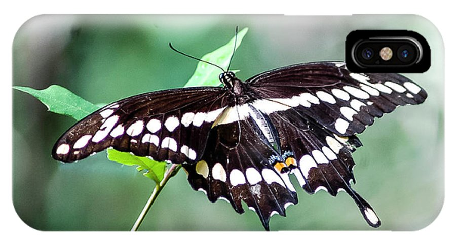 Giant Swallowtail IPhone X Case featuring the photograph Resting Giant by Norman Johnson