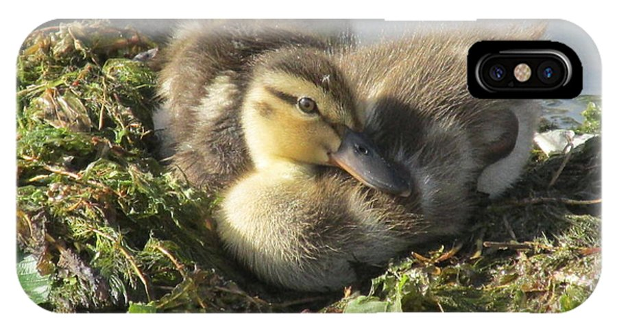 Ducklings IPhone X Case featuring the photograph Resting On The Lake Shore. by Mike Homblette