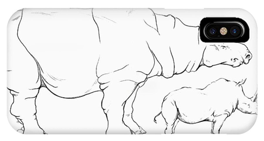 20th Century IPhone X Case featuring the photograph Rhinoceros Comparison by Granger