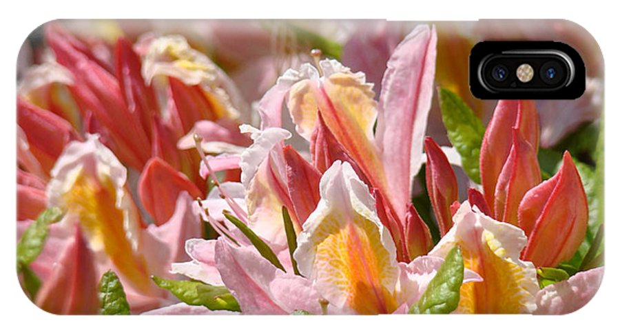 Rhodie IPhone X Case featuring the photograph Rhodies Flowers Art Prints Pink Orange Rhododendron Floral Baslee Troutman by Baslee Troutman