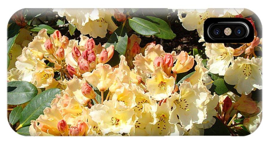 Rhodie IPhone X Case featuring the photograph Rhododendrons Garden Art Prints Creamy Yellow Orange Rhodies Baslee by Baslee Troutman