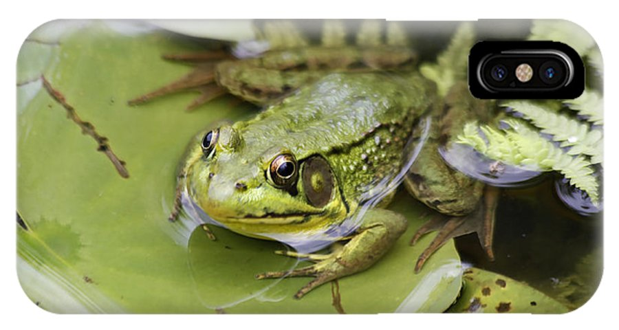Frog IPhone X Case featuring the photograph Ribbet In The Pond by Deborah Benoit