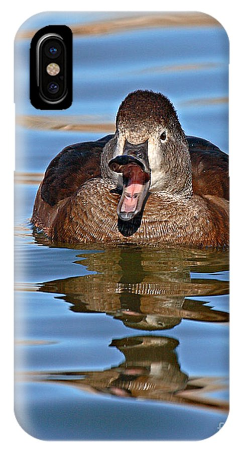 Duck IPhone Case featuring the photograph Ring-necked Duck Spring Call by Max Allen