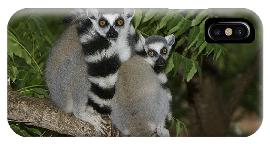 Madagascar IPhone X Case featuring the photograph Ring-tailed Lemurs by Michele Burgess