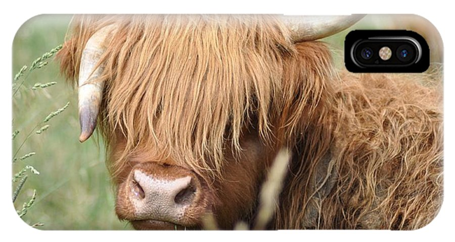 Cow IPhone X Case featuring the photograph Ringo - Highland Cow by Bill Cannon