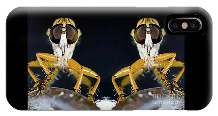 Robber IPhone X Case featuring the photograph Robber Fly - Alien Visitors by Michael Moriarty