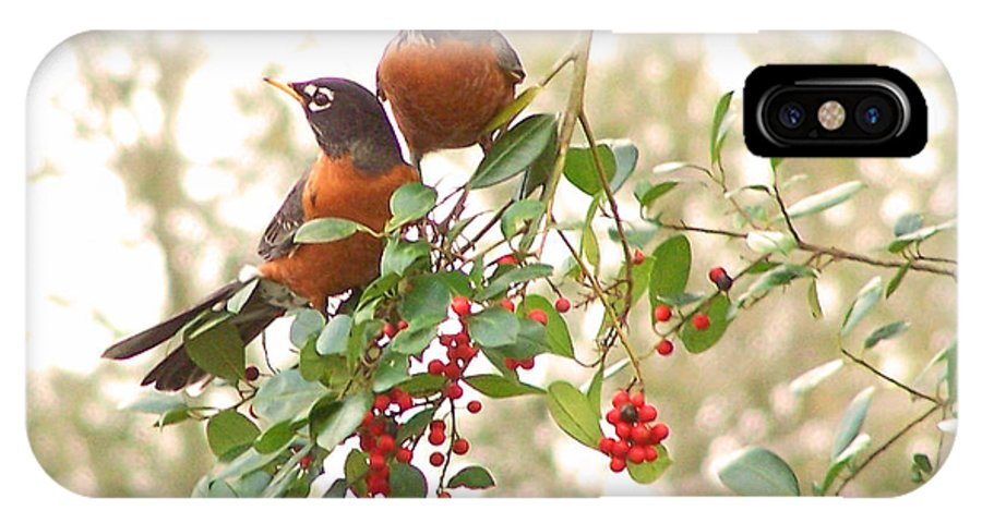 Nature IPhone X Case featuring the photograph Robins In Holly by Peg Urban