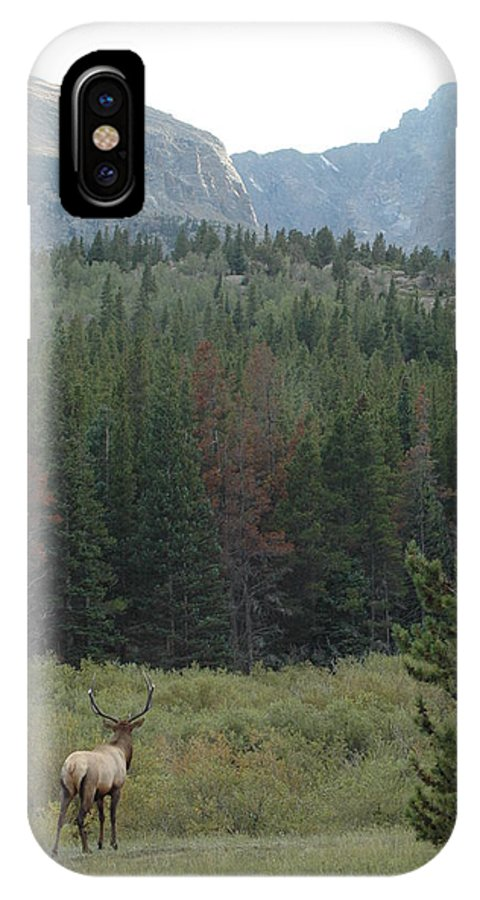 Elk IPhone Case featuring the photograph Rocky Mountain Elk by Kathy Schumann