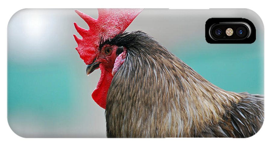 Teresa Blanton IPhone X Case featuring the photograph Rooster Comb by Teresa Blanton