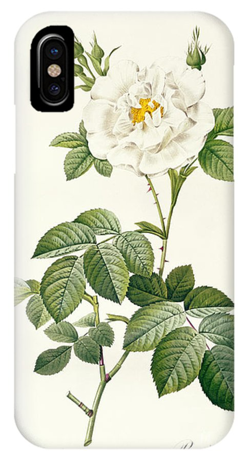 Rosa IPhone X Case featuring the drawing Rosa Alba Flore Pleno by Pierre Joseph Redoute