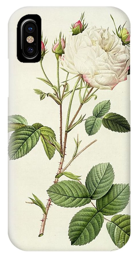 Rosa IPhone X Case featuring the drawing Rosa Centifolia Mutabilis by Pierre Joseph Redoute