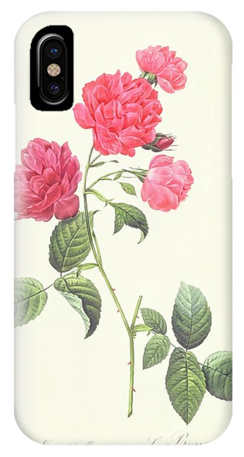 Rosa IPhone X Case featuring the drawing Rosa Indica Caryophyllea by Pierre Joseph Redoute
