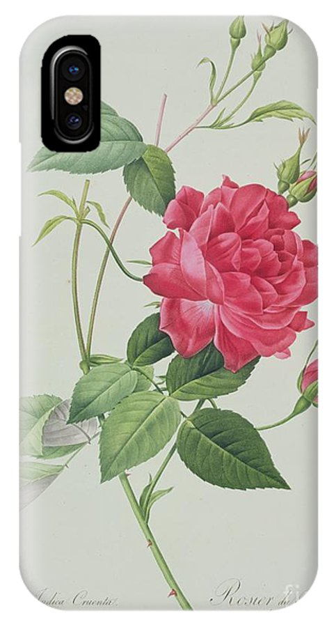 Red IPhone X Case featuring the drawing Rosa Indica Cruenta by Pierre Joseph Redoute