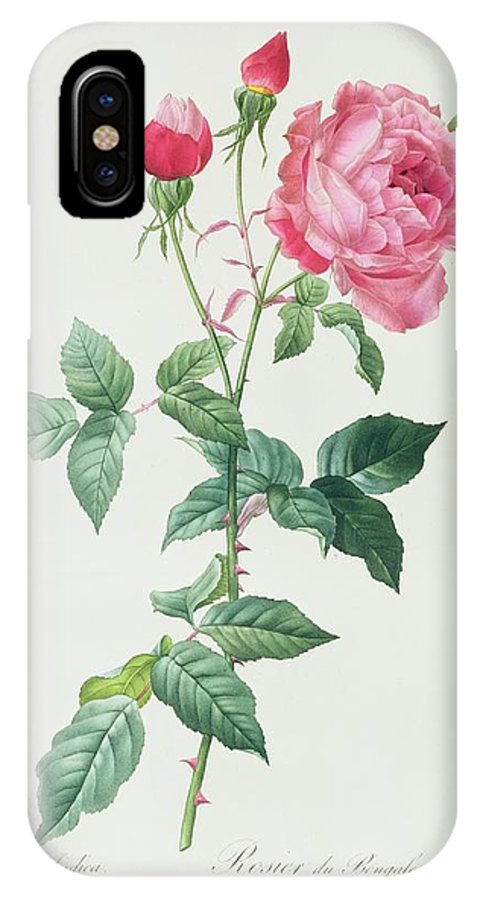 Rosa IPhone X Case featuring the drawing Rosa Indica by Pierre Joseph Redoute
