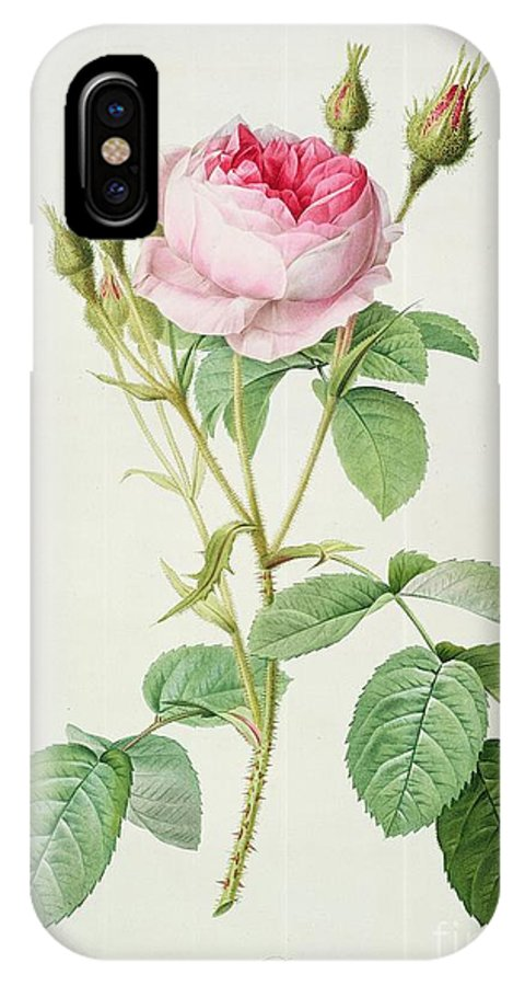 Rosa IPhone X Case featuring the drawing Rosa Muscosa Multiplex by Pierre Joseph Redoute