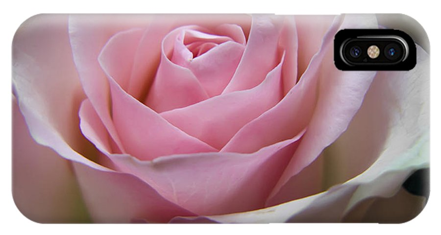 Rose IPhone X Case featuring the photograph Rose by Daniel Csoka