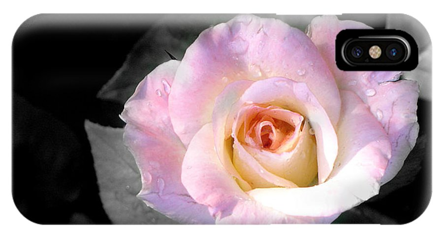 Princess Diana Rose IPhone Case featuring the photograph Rose Emergance by Steve Karol