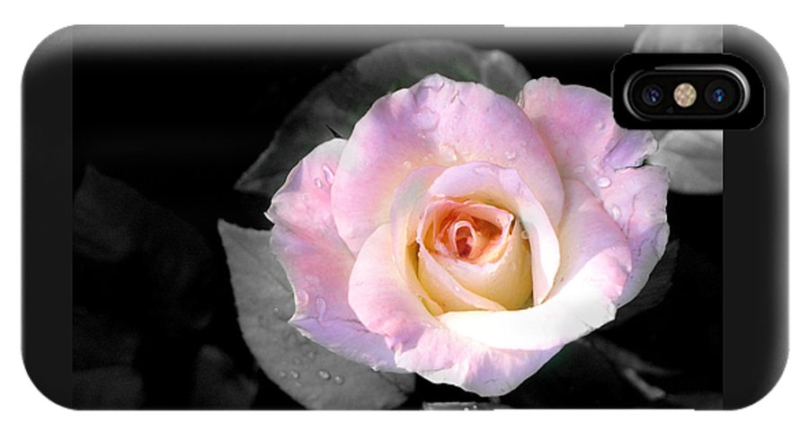 Princess Diana Rose IPhone X Case featuring the photograph Rose Emergance by Steve Karol