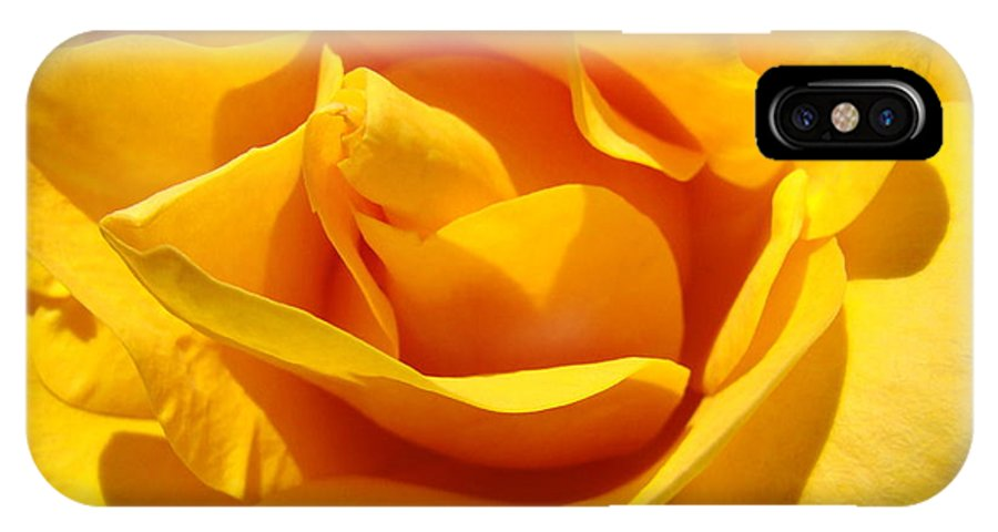 Rose IPhone X Case featuring the photograph Rose Flower Orange Yellow Roses 1 Golden Sunlit Rose Baslee Troutman by Baslee Troutman