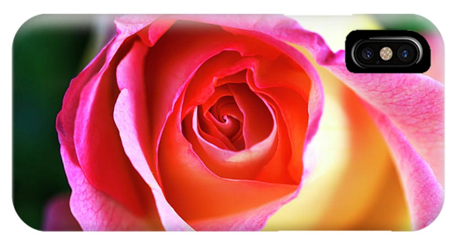 Rose IPhone X Case featuring the photograph Rose by John Rizzuto