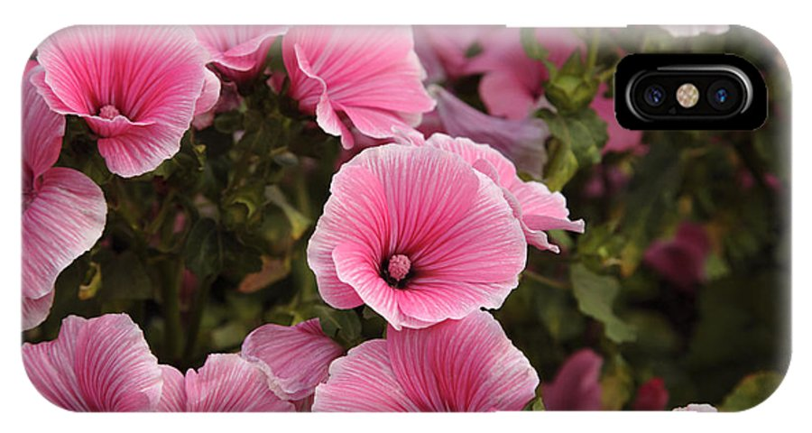 New England IPhone X Case featuring the photograph Rose Mallow Flowers by Erin Paul Donovan