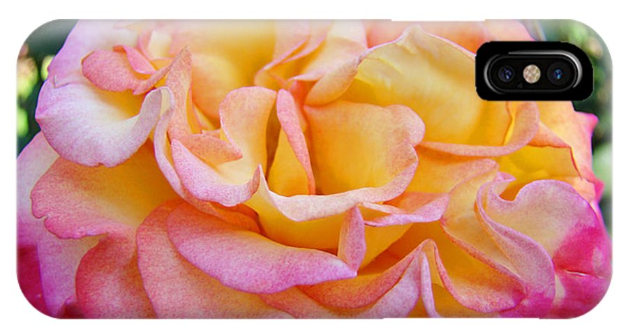 Rose IPhone X Case featuring the photograph Rose Pink Yellow Rose Flower 2 Rose Garden Giclee Prints Baslee Troutman by Baslee Troutman