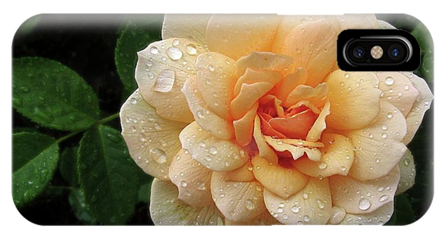 Flower IPhone X Case featuring the photograph Rose Rain by Jessica Jenney