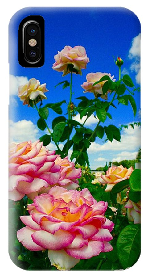 Rose Garden IPhone X Case featuring the photograph Rose To The Sky by Bennett Thompson