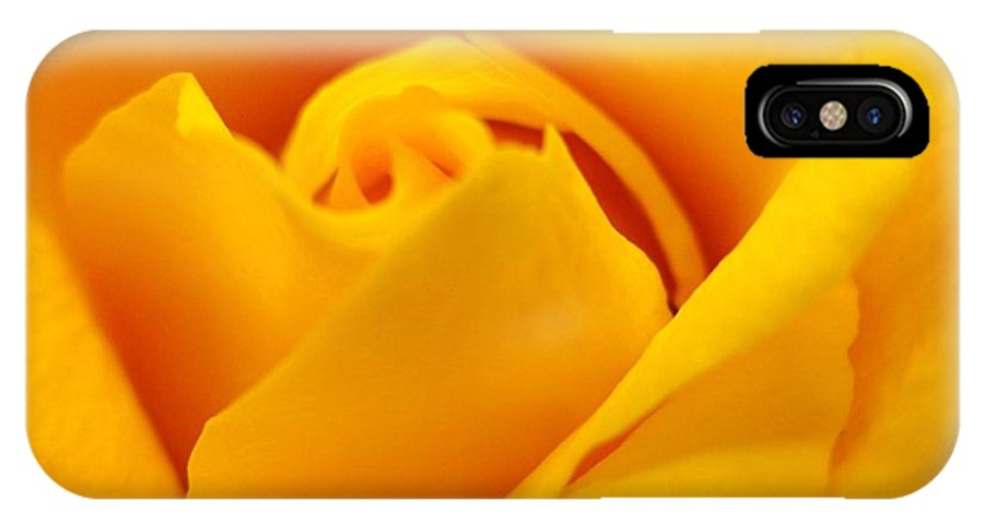 Rose IPhone X Case featuring the photograph Rose Yellow by Rhonda Barrett