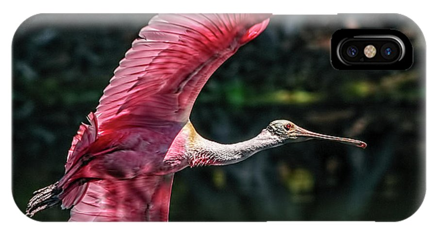 Roseate Spoonbill IPhone X Case featuring the photograph Roseate Spoonbill by Steven Sparks