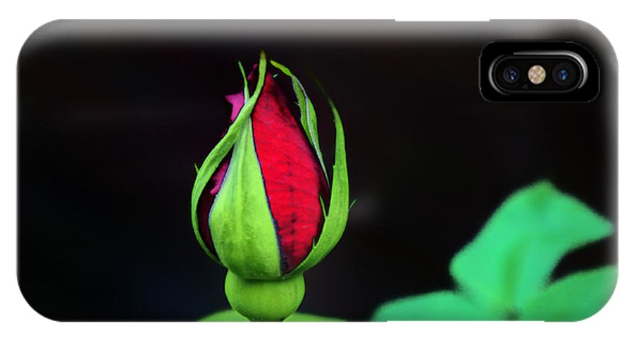 Rose IPhone X Case featuring the photograph Rosebud by Bill Cannon