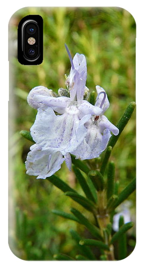 Rosemary IPhone X Case featuring the photograph Rosemary Bloom by Valerie Ornstein