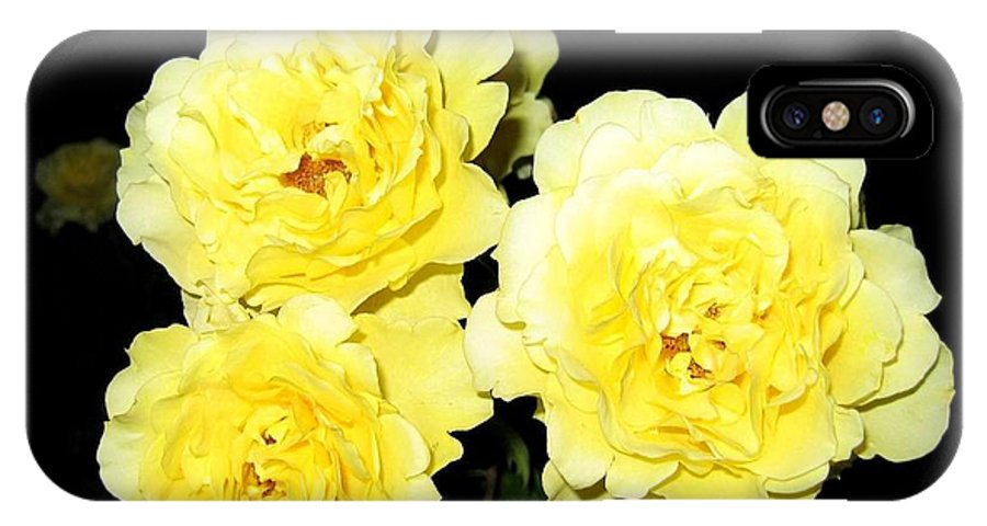 Roses IPhone X Case featuring the photograph Roses 11 by Will Borden