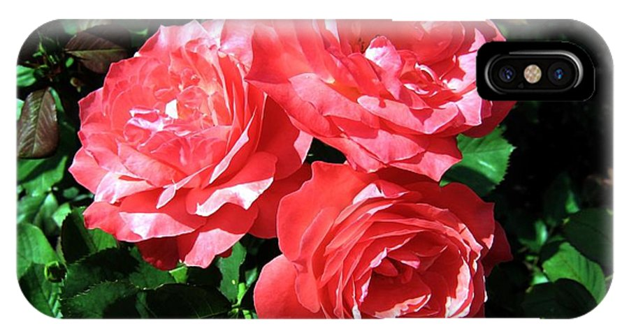 Roses IPhone X Case featuring the photograph Roses 9 by Will Borden