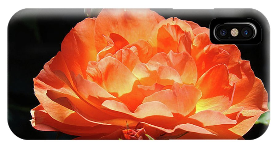 Rose IPhone X Case featuring the photograph Roses Orange Rose Flowers Rose Garden Art Baslee Troutman by Baslee Troutman